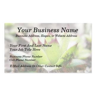 Houseleek - Sempervivum Business Card