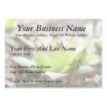 Houseleek - Sempervivum Business Card Template