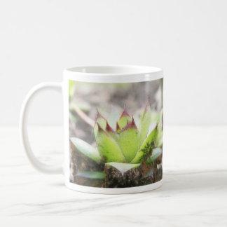 Houseleek - Sempervivum Coffee Mug