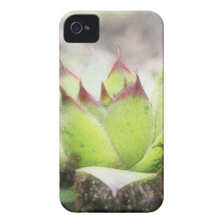 Houseleek - Sempervivum iPhone 4 Case