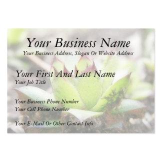 Houseleek - Sempervivum Large Business Card