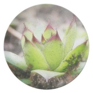 Houseleek - Sempervivum Plate
