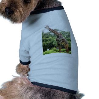 Houston Giraffe Doggie Tee Shirt