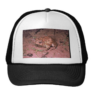 Houston Toad Mesh Hat