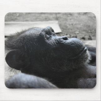 Houston Zoo Mouse Pad
