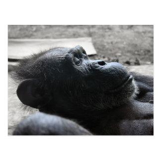 Houston Zoo Postcards