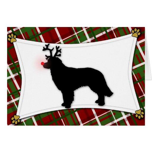 Hovawart Reindeer Christmas Card