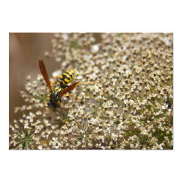 Hover Flies Invitation
