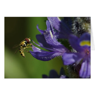 Hover fly feeding on pollen greeting card