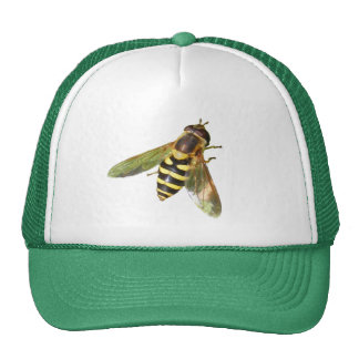 Hover fly ~ hat