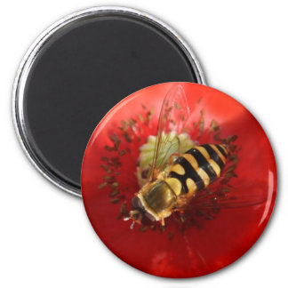 Hover Fly Magnet