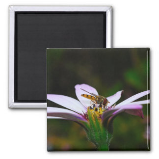 Hover Fly on a Daisy 2 Inch Square Magnet