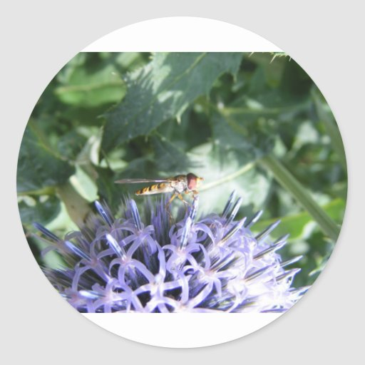 Hover fly on a purple flower round sticker