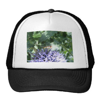 Hover fly on a purple flower trucker hat