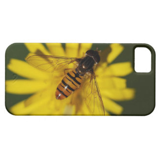 Hover Fly Photo iPhone SE/5/5s Case