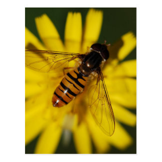 Hover Fly Photo Postcard