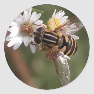 Hover Fly Round Stickers