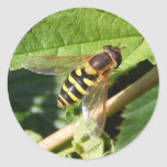 Hover fly ~ sticker