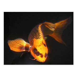 Hover The Great KOI Postcard