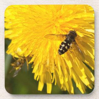 Hoverflies on Dandelions Coasters