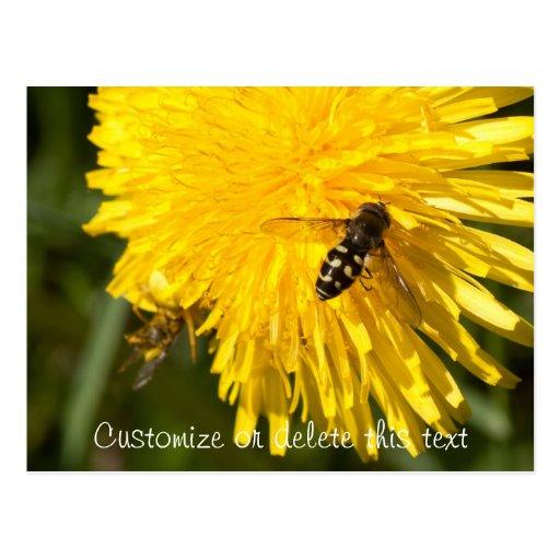 Hoverflies on Dandelions; Customizable Postcard