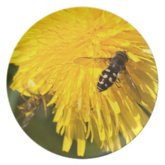 Hoverflies on Dandelions Melamine Plate