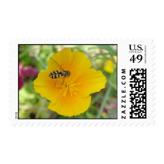 Hoverfly and Californian Poppy Postage Stamps
