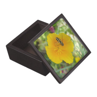 Hoverfly and Californian Poppy Premium Gift Box