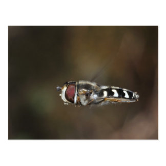 Hoverfly hovering postcard