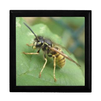 Hoverfly Macro Gift Box