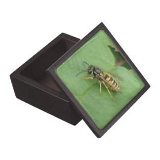 Hoverfly on a Leaf Premium Gift Box