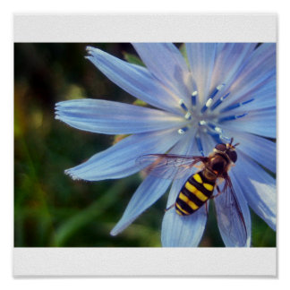 hoverfly on blue posters