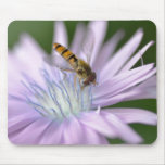 Hoverfly on chicory more flower mouse pad