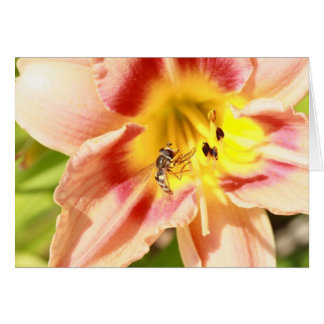 hoverfly on pink lily card