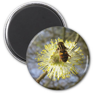 Hoverfly On Willow Blossom Magnet