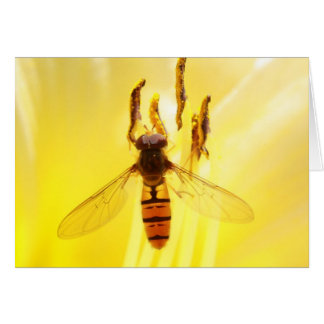 hoverfly on yellow lily card