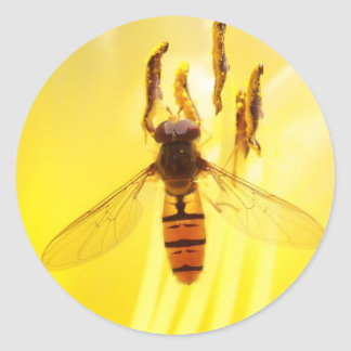 hoverfly on yellow lily classic round sticker
