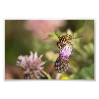 Hoverfly Arte Fotografico