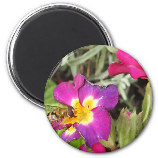 hoverfly resting magnet
