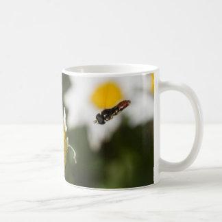 Hoverfly y mariquita en una margarita taza