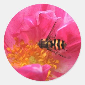Hoverfly y Rosa Mundi Pegatina Redonda