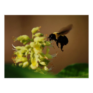 Hovering Bumblebee Watercolor Style Photo Art Print