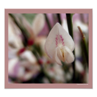 Hovering Heuchera White & Purple Flowers Poster