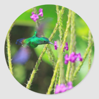 Hovering Hummingbird Blur Classic Round Sticker