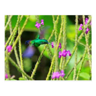 Hovering Hummingbird Blur Postcard
