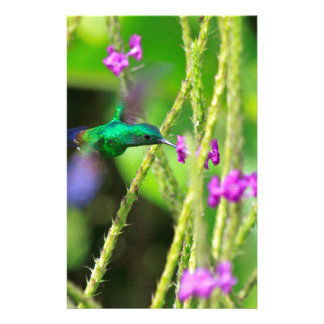 Hovering Hummingbird Blur Stationery Paper