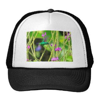 Hovering Hummingbird Blur Trucker Hat