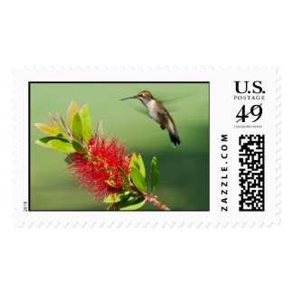 Hovering Hummingbird Postage Stamps