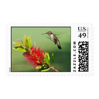 Hovering Hummingbird Postage Stamp