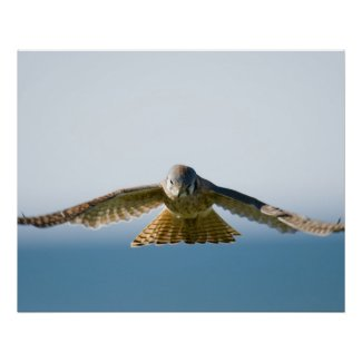 Is The Kestrel Totem Working With You?